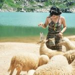 Đàn cừu không được sạch cho lắm, chỉ có mấy bé cừu con thì lông trắng sạch hơn xíu.