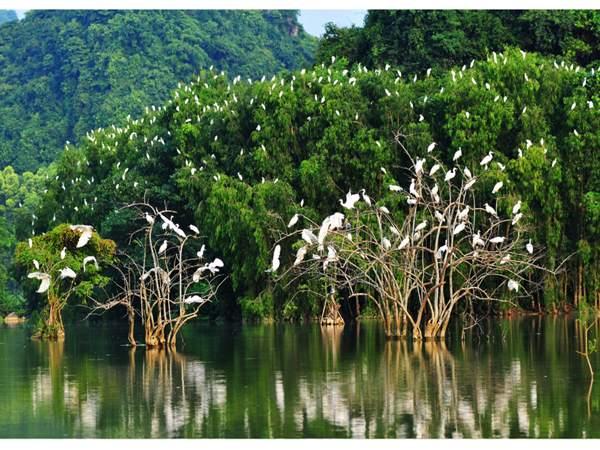 Vườn chim Cà Mau - Vương quốc của hàng trăm nghìn loại chim khác nhau.