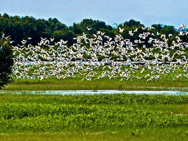 Tràm Chim nổi tiếng là khu sinh thái đa dạng và phong phú.