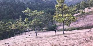 Kinh nghiệm đi đồi cỏ hồng đà lạt