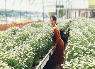 kinh nghiệm đi Làng hoa vạn thành