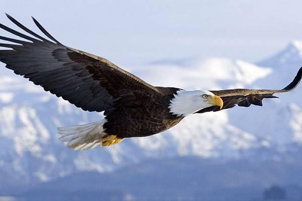 Nằm mơ thấy con chim đại bàng là điềm báo gì?