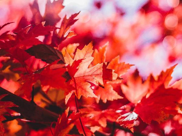 Giải mã mơ thấy lá rụng là điềm báo điều gì?