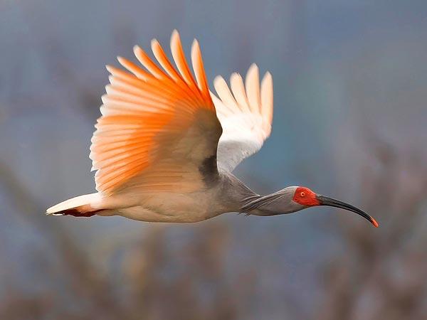 mơ thấy chim bay