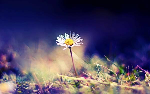 Nằm mơ thấy hoa nở đánh con gì đánh số mấy