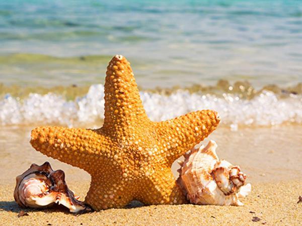 Mơ thấy sao biển là điềm gì? Giải xui bằng con lô nào?