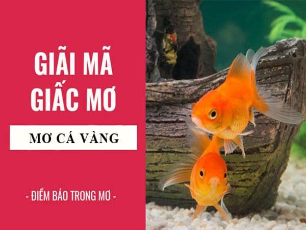 Nằm mơ thấy cá vàng điềm báo lành hay dữ?